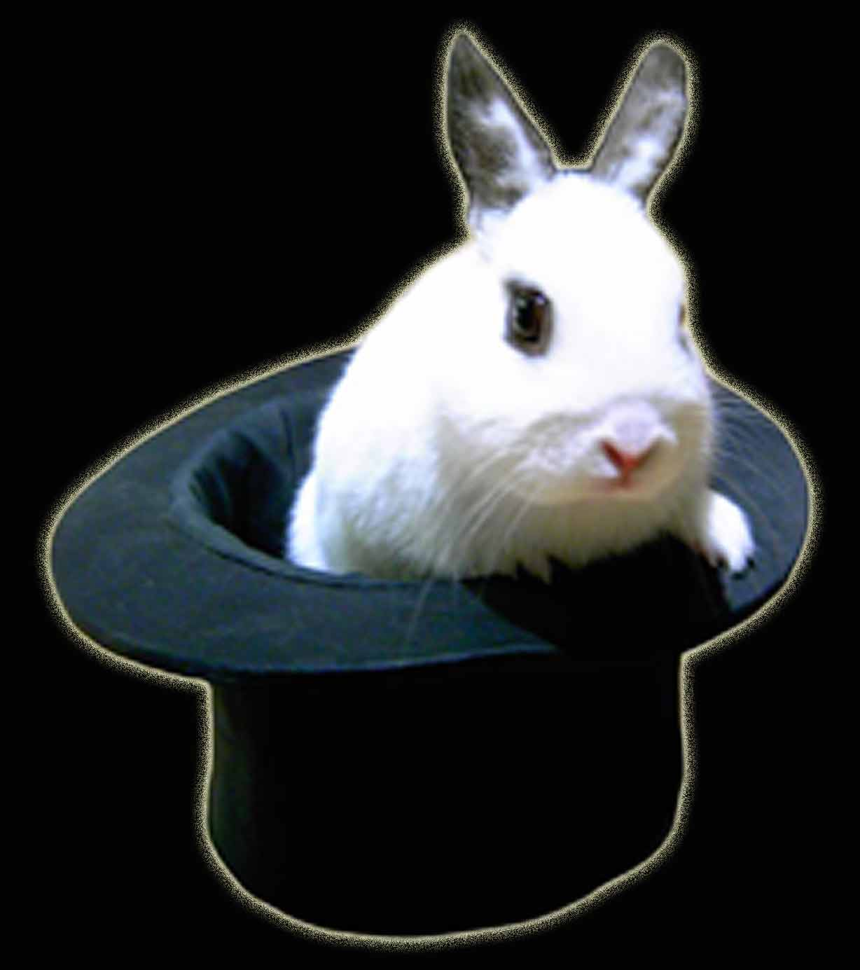 rabbit-in-hat.jpg